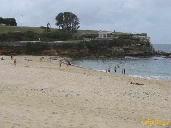 Plaża Coogee niedaleko Sydney w Australii