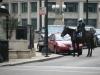 Policja konna Chicago