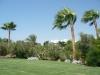 Egipt, Sharm el Sheik - namiastka zieleni w kurorcie