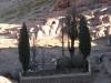 500-letni cyprys po trasie na Synaj