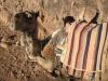 Wielbłąd odpoczywajacy po trasie