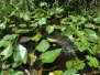 USA, Park Everglades część 1/3