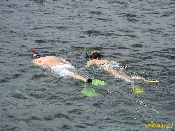 Główna plaża w Manly - snorkeling