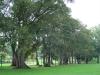 Park w centrum Melbourne