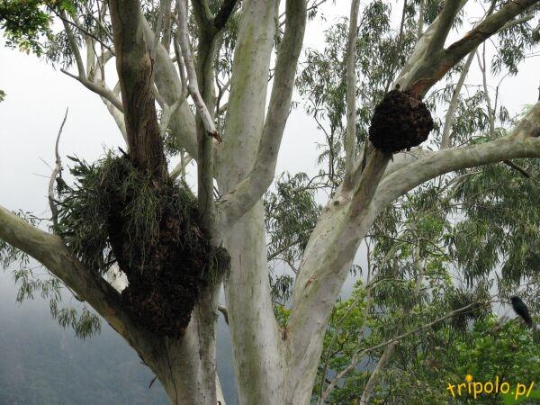 Coś na drzewie