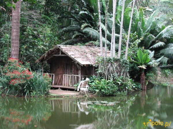 Zainscenizowany obrazek z dżungli