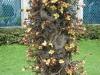 Fajne kwiatki na drzewie