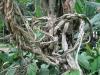 Poplątane gałęzie