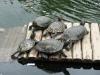 W ogrodzie botanicznym są też zwierzaki, np. żółwie