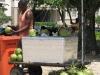 Plaża Vermelha - sprzedawca kokosów