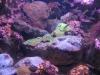 Oceanarium w Sydney