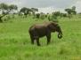 Tanzania, safari cz.1 - zielona sawanna i pierwsze, pojedyncze zwierzęta