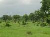 tnz_safari_002