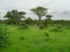 tnz_safari_006
