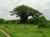 tnz_safari_007
