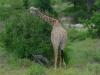 tnz_safari_008