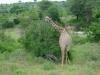tnz_safari_009