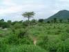 tnz_safari_010