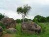 tnz_safari_028