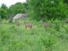 tnz_safari_029
