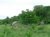 tnz_safari_030