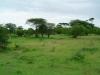 tnz_safari_031