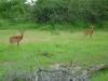 tnz_safari_033