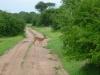 tnz_safari_035