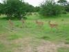 tnz_safari_036