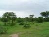 tnz_safari_037