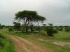 tnz_safari_081
