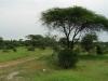 tnz_safari_082
