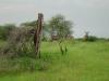 tnz_safari_083
