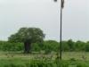 tnz_safari_042