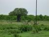 tnz_safari_043