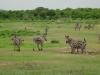 tnz_safari_045