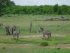 tnz_safari_046