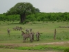 tnz_safari_048