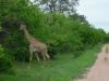 tnz_safari_049