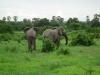tnz_safari_054