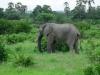 tnz_safari_057