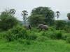 tnz_safari_061