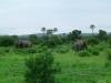 tnz_safari_062