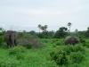 tnz_safari_064