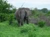 tnz_safari_065