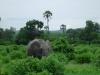 tnz_safari_066