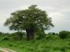 tnz_safari_067