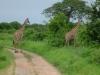 tnz_safari_068