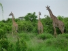 tnz_safari_069