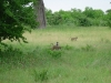 tnz_safari_076